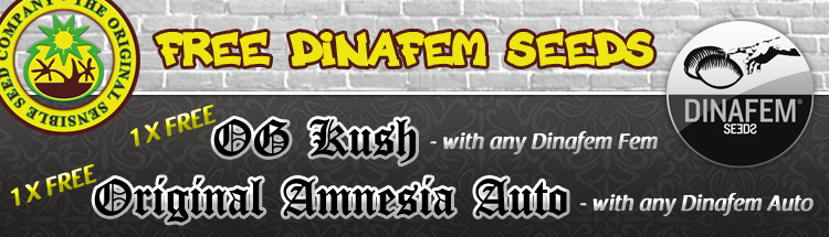 Dinafem Seeds Offer - Free OG Kush Seeds
