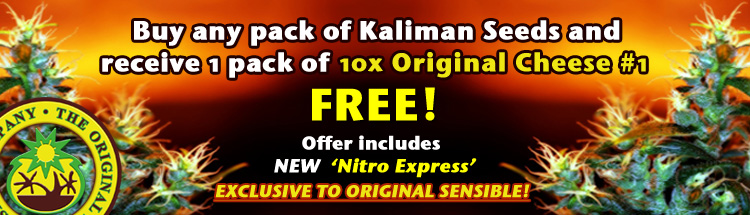 Receive a pack of 10 Cheese#1 weed seeds FREE with every pack of Kaliman Seeds.