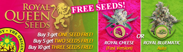 Bulk Cannabis Seeds From Royal Queen Seeds