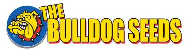 Bulldog Seeds for Sale - Free Weed Seeds