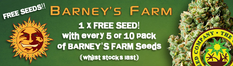 Buy Bulk Cannabis Seeds From Barneys Farm