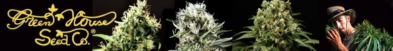 View Green House Seeds - Largest Selection Available Online - Free Weed Seeds.