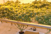 Should I Grow Hydroponic Marijuana