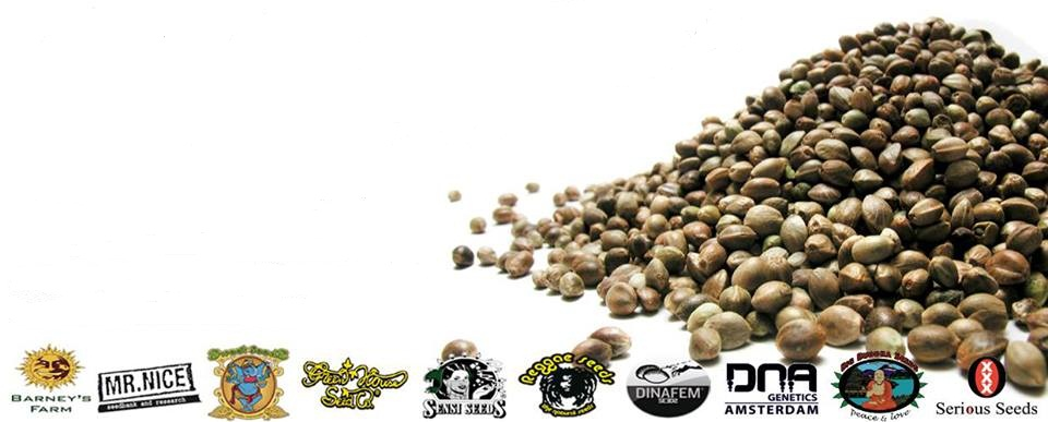 Buy Cannabis Seeds Online - Free Marijuana Seeds With Every Order!