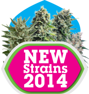 New Cannabis Strains 2014