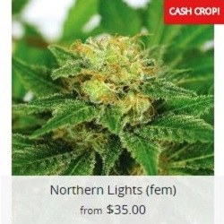 Buy Northern Lights Cannabis Seeds