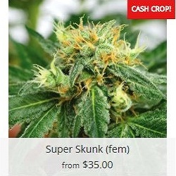 Buy Super Skunk Cannabis Seeds