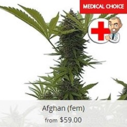 Buy Afghan Seeds