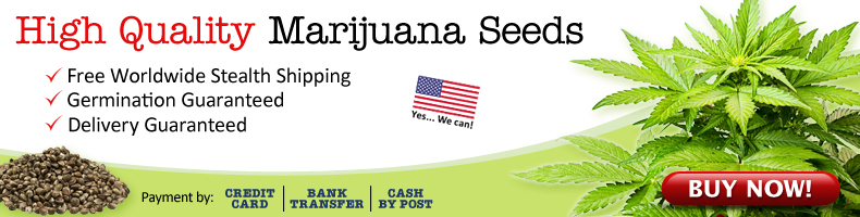 Buy Marijuana Seeds In USA