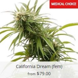 Buy California Dream Seeds