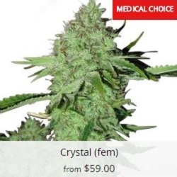 Buy Crystal Seeds