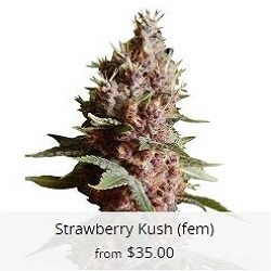 Strawberry Kush Seeds