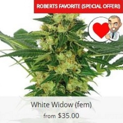 Buy White Widow Seeds